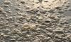 Эксперты признали реку Каменку экстремально загрязнённой