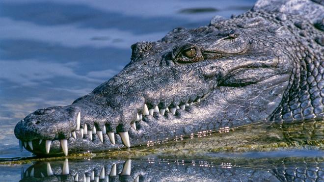 На Филиппинах крокодил съел 10-летнего ребенка