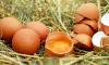 Бразильцы закидали яйцами автобус с национальной сборной