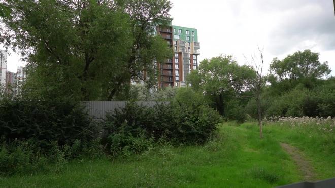 Власти объяснили, для чего вырубают лес на участке у Пулковского парка в Петербурге