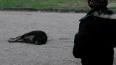 В Петербурге возбуждено уголовное дело об отравлениях ...