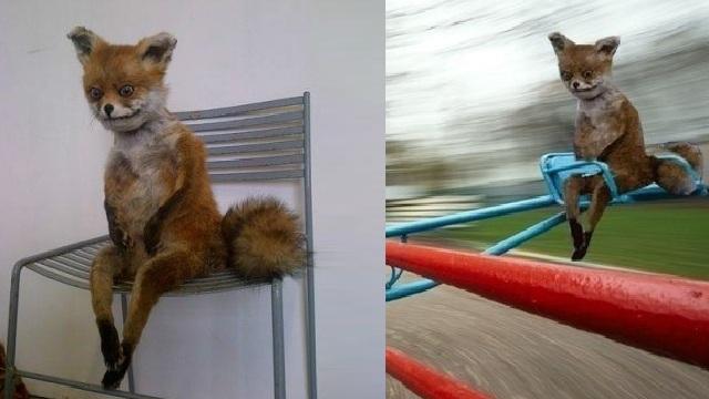Надписью, картинки смешной лисы которая устала