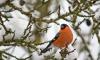 В Петербурге стартовал сезон зимней подкормки птиц
