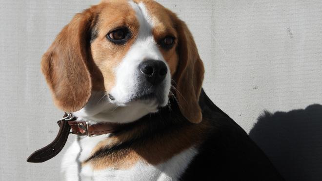 Петербургские парламентарии поддержали идею приравнять собак-помощников к поводырям