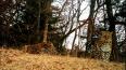 Фотоловушка сняла котят редкого дальневосточного леопард...