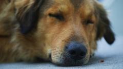 Почти 6 млн рублей потратят на уборку погибших животных с улиц Петербурга