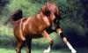 Маленькую петербурженку искалечила лошадь, принадлежащая ее бабушке