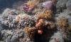 У побережья Италии на глубине 55 метров нашли уникальные кораллы
