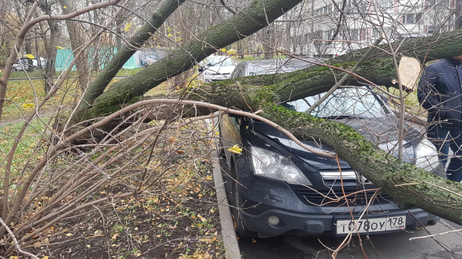 Штормовой ветер повалил уже 20 деревьев в Петербурге