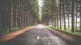 В следующем году отремонтируют участок дороги Луга-Новго...
