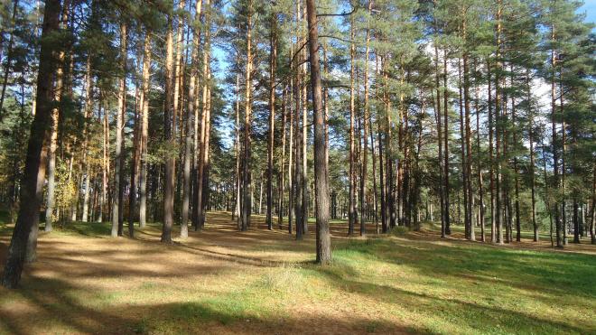 Снова отказ: Муринский парк будет застроен