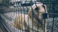 В Москве на содержание бездомных животных тратится ...