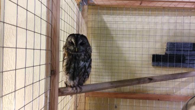 Измученную сову без хвоста изъяли из контактного зоопарка в Петербурге