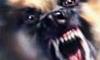 В Колпино собака разорвала лицо двухлетнему ребенку