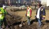 В Петербурге высадят 12 тысяч молодых деревьев