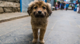 Суд Петербурга запретил освобождать животных после ...
