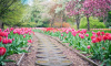 На Васильевском острове высадят 20 тысяч тюльпанов