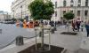 Петербуржцы возмутились, что активисты высадили клены на площади Восстания за свой счет