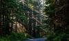 Леса и лесопарковые зоны Петербурга закрыли для посетителей до мая