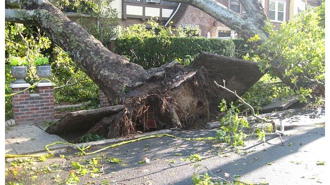 Дерево покалечило жительницу Петрозаводска