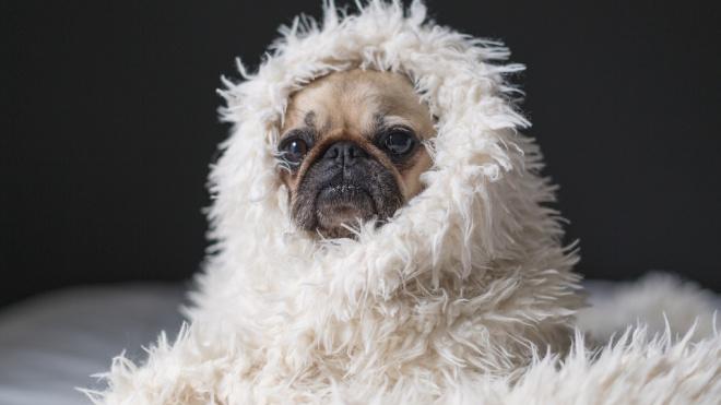 Ветврачи заявили, чтокошки и собаки могут заболетькоронавирусом