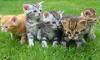 В Петербурге пятеро котят с именами известных футболистов ищут хозяев