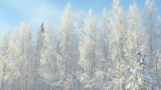 Синоптики: Предстоящая зима в Петербурге будет холоднее прошлой