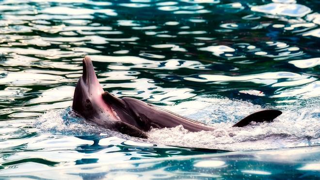 Из Крыма в грузовике пытались вывезти двух дельфинов из Красной Книги