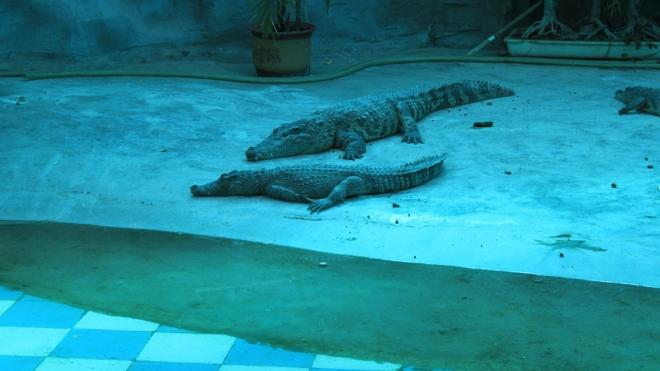 В Петербурге откроется океанариум с крокодилами и крабами