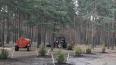 В Петербурге началась весенняя посадка деревьев и ...