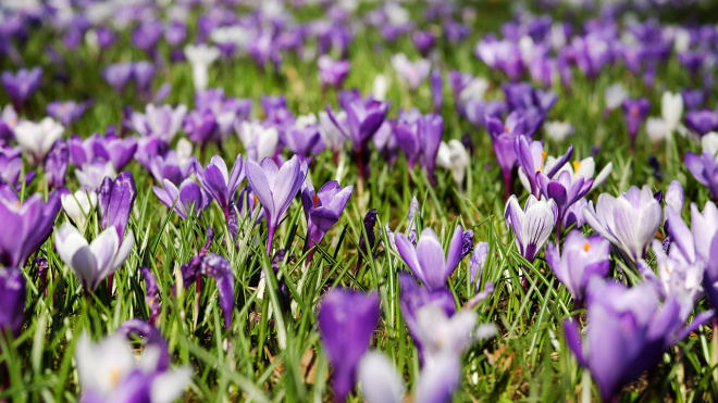 На майские праздники жителей Ленобласти ожидает теплая погода без осадков