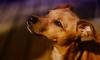В Петербурге будут судить мужчину, который выбросил щенка из окна
