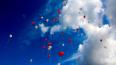 В Петербурге отметят Всемирный день доноров костного ...
