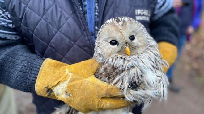 В Петербурге на волю выпустили двух редких сов
