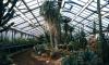Ботанический сад Петербурга распродает растения