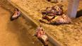 На улице Димитрова выбросили ободранные головы животных