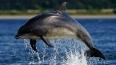 Минобороны купит самцам боевых дельфинов симпатичных ...