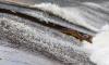 Чилийский лосось не прошел таможню в Петербурге