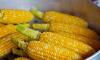 В Петербург не пустили 25 тонн зараженной кукурузы для попкорна