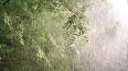 Петербург ожидают ливневые дожди