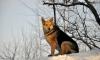 Результаты экспертизы подтвердили: собака Лиза из парка Монрепо умерла своей смертью