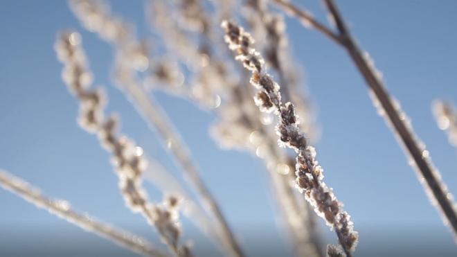 МЧС предупреждает о морозах до 30 градусов в Ленобласти