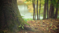 В парке Сестрорецка вместо вырубленных старых деревьев ...