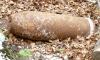 В Красносельском районе нашли 56 боеприпасов времен войны