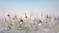 Весна неуверенно вступает в свои права: до конца марта в...