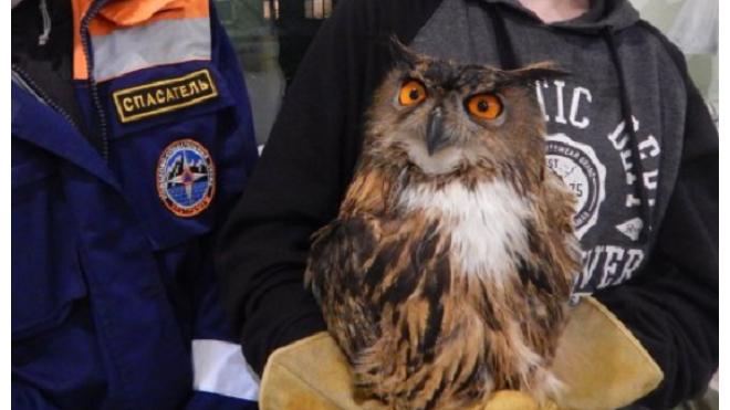 В Петербурге спасли двух хищных птиц из Красной Книги