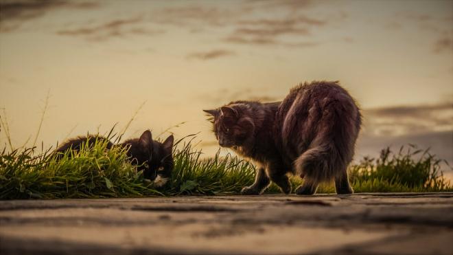 В ЗакСе поддержали запрет на замуровывание кошек в подвалах