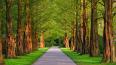 Смольный выкупит парки и скверы на частных землях
