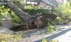 Почти 25 тысяч жителей Ленобласти остались без света