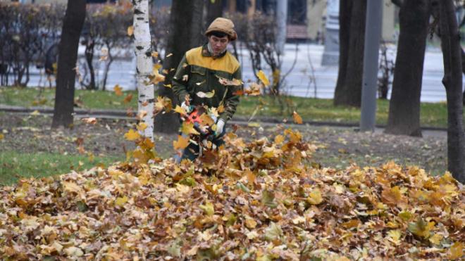 Эксперты выступили против тотальной уборки листвы в Санкт-Петербурге